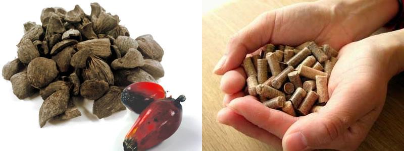 Biomass Business Activities